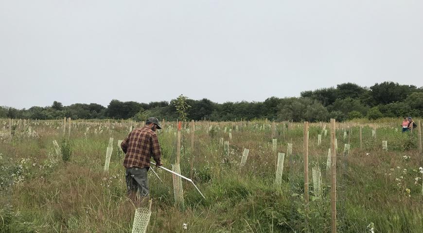Vegetation Monitoring