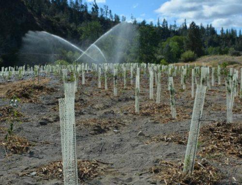 Trinity River Restoration Program