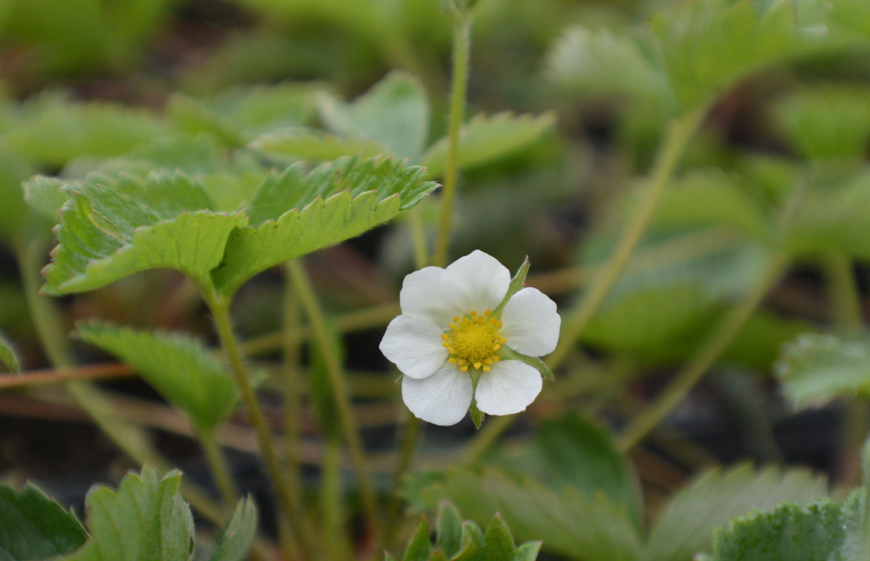 Samara Restoration Native Northern, Ca plants