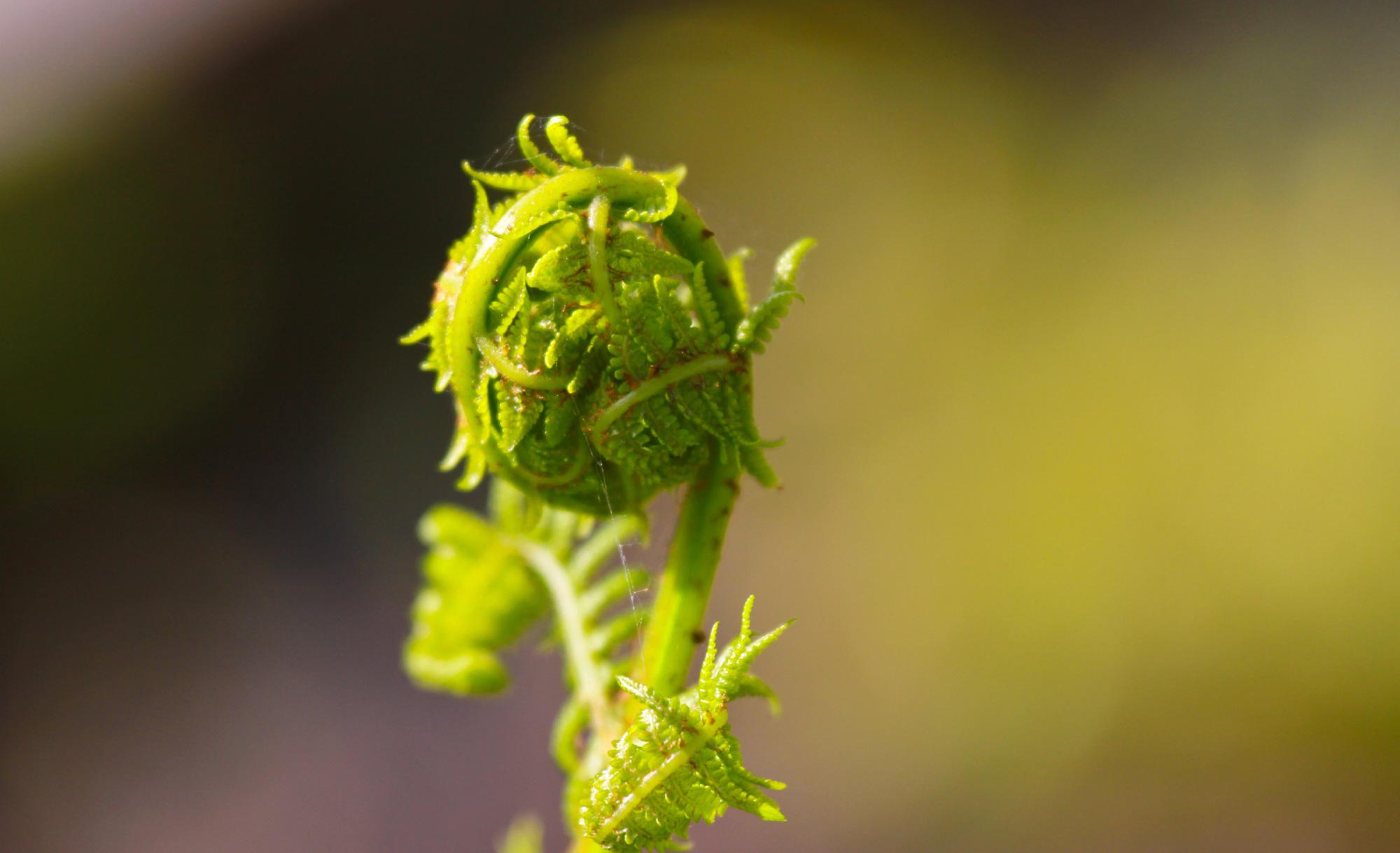 Native Northern California Plants