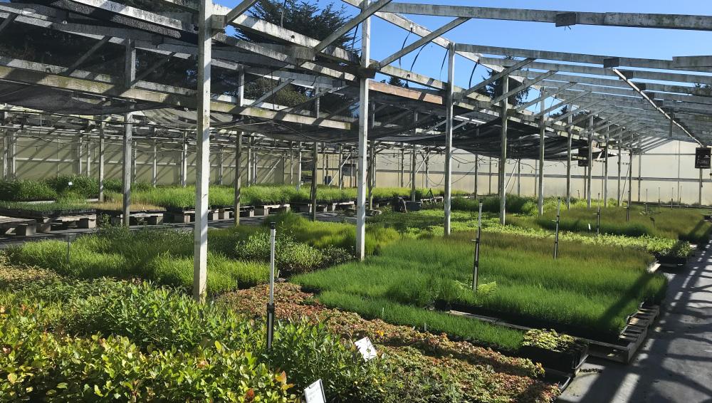 Samara Restoration Nursery Over 200 Native California Plants