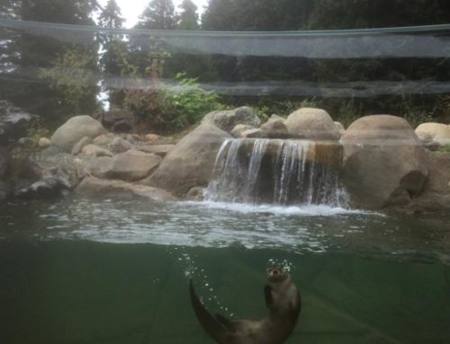 Sequoia Park Zoo Watershed Heroes Project