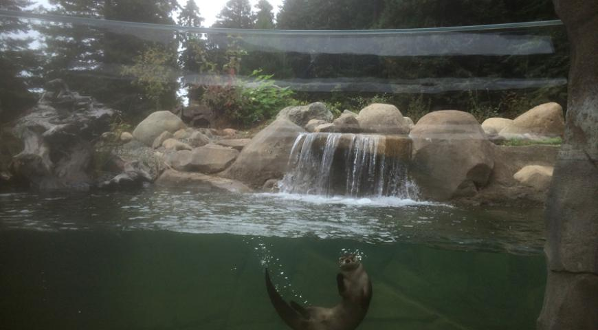 Otter in paradise