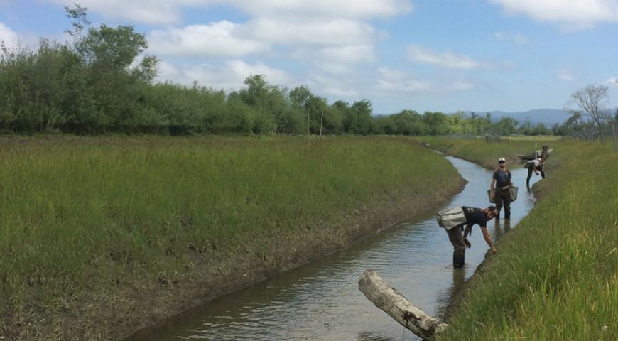 Salt River Ranch Restoration Project